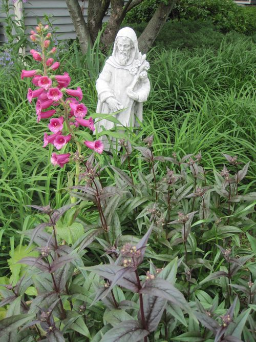 Saint Fiacre, Patron Saint of Gardeners with daylillies, foxglove and penstemon.