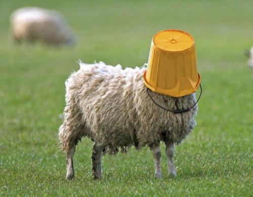 SheepBucket